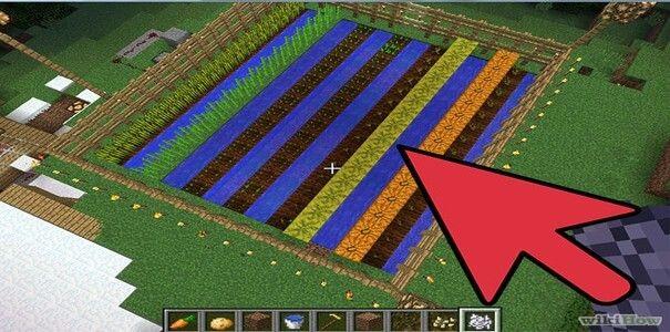 plantaçãoa